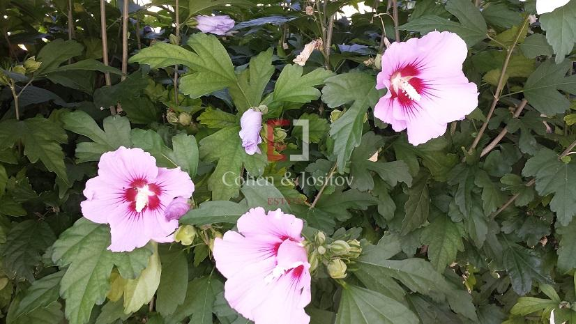 30_Garden flowers